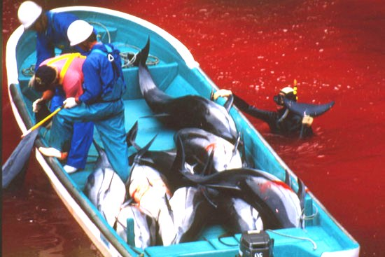 Help Campaign Whale end the horiffic Japanese dolphin slaughter